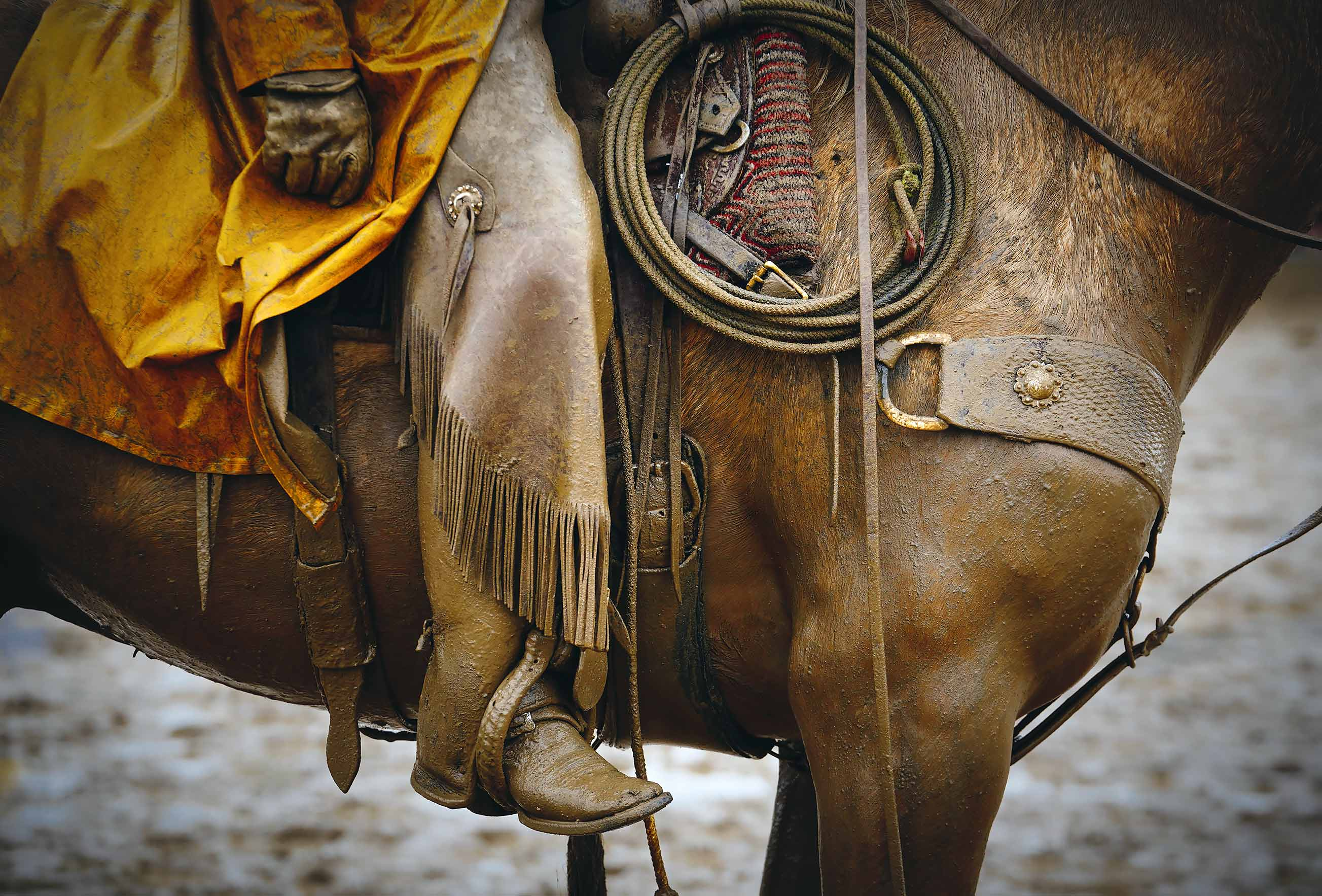 Cowboy on his horse with muddy tack
