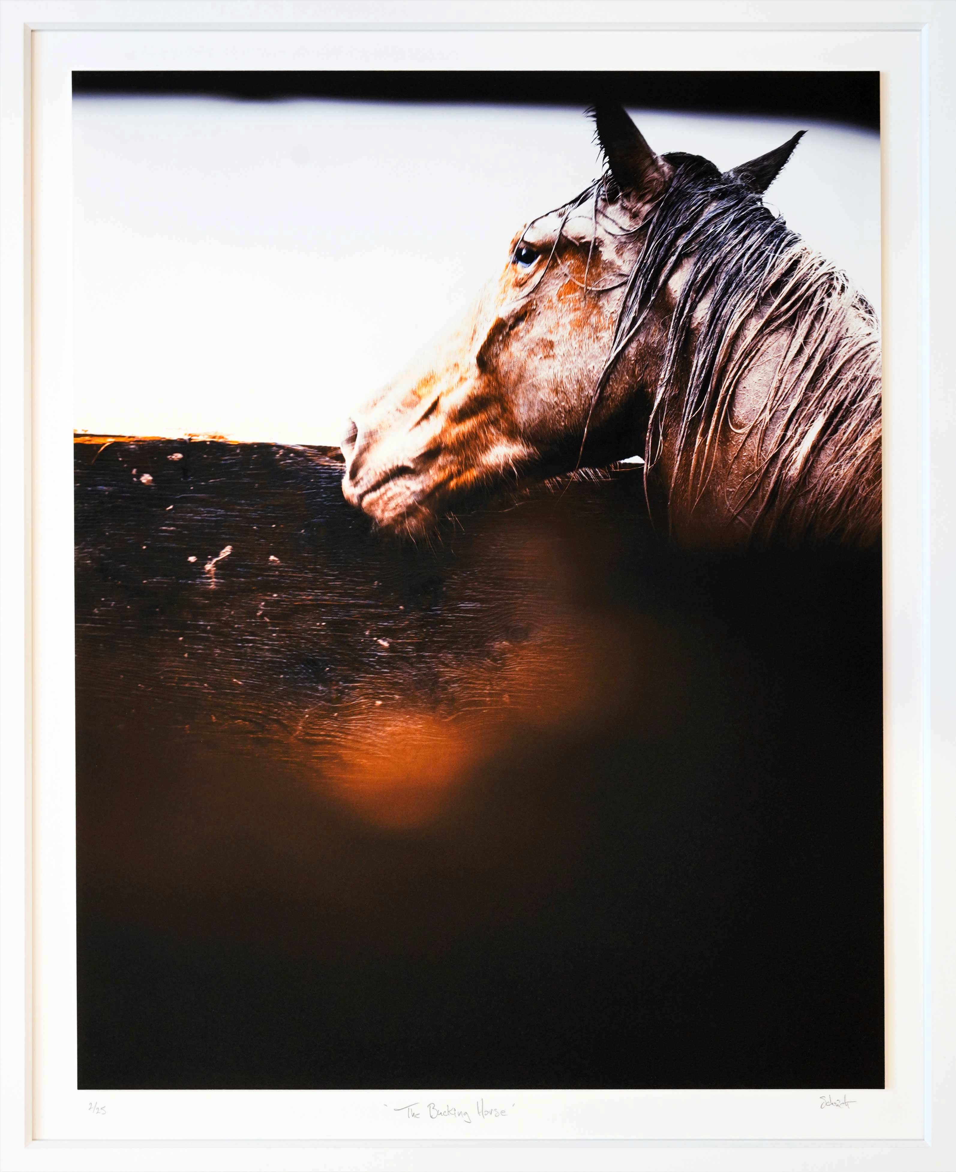 The Bucking Horse - Gallery Print