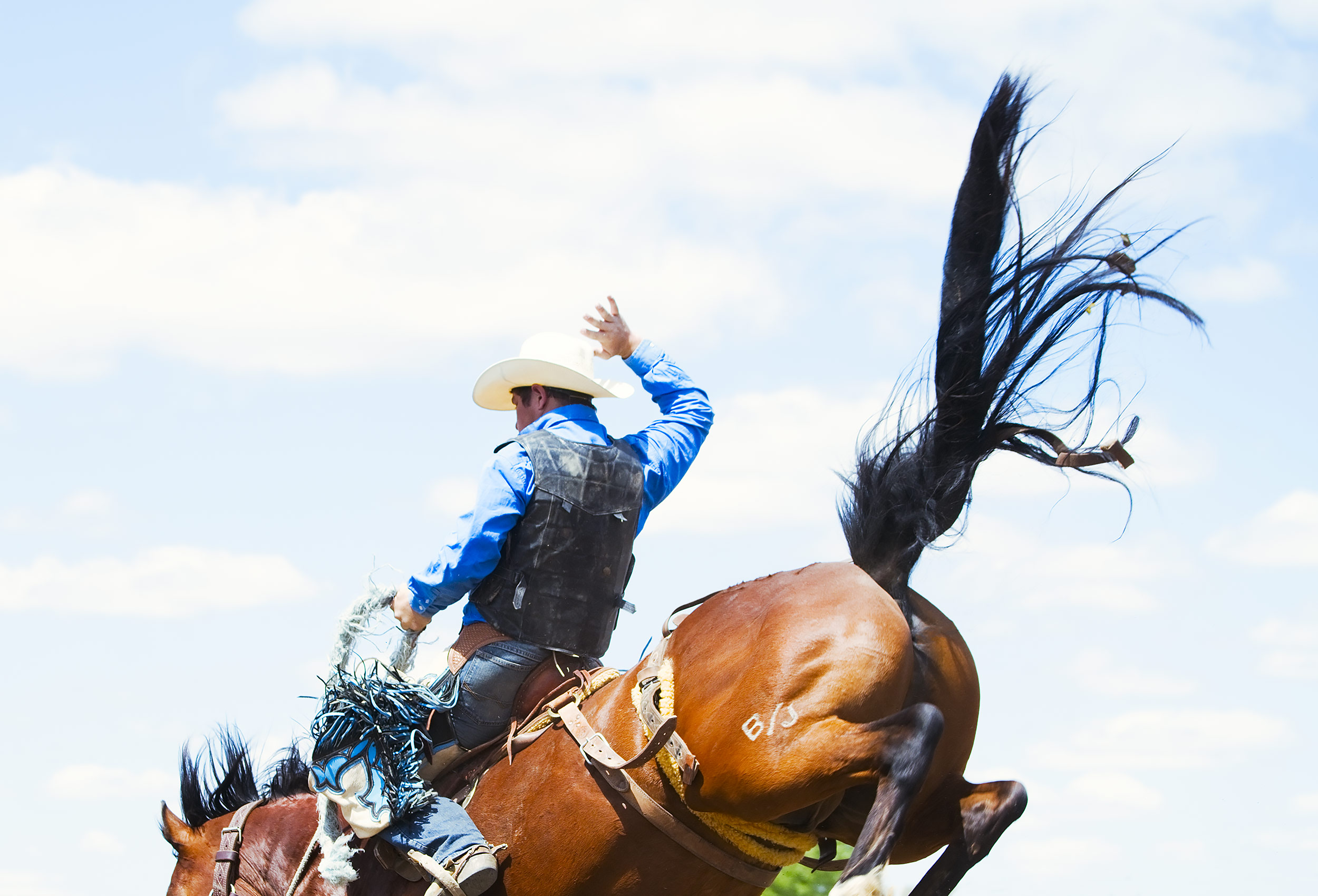 Cowboy riding a bucking bronco at the Bucking Horse Sale Rodeo in Miles City, Montana