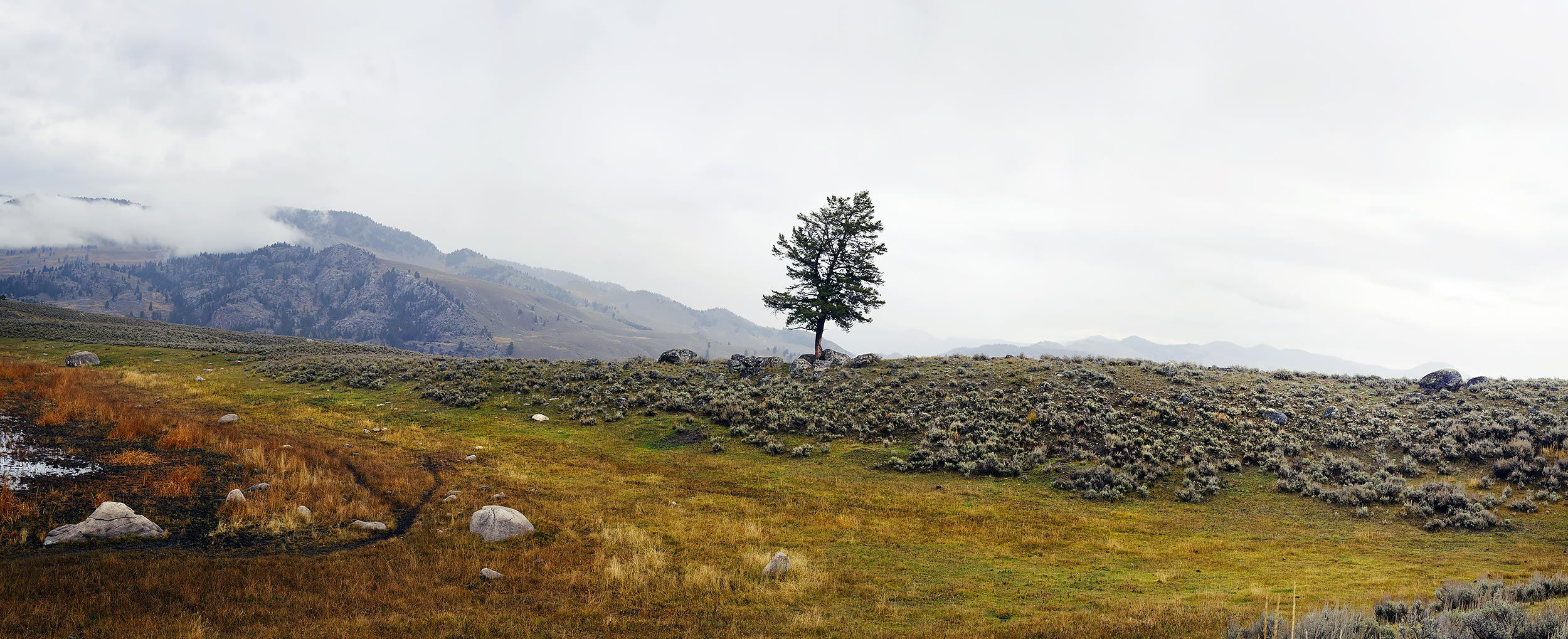 A Lone Tree Surrounded by Nurse Rocks, Yellowstone National Park