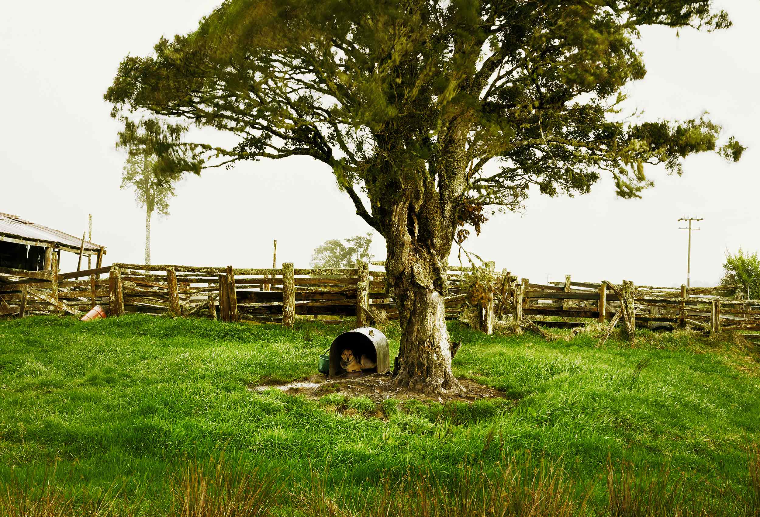 A dog in his dog house under a large tree on the South Island of New Zealand