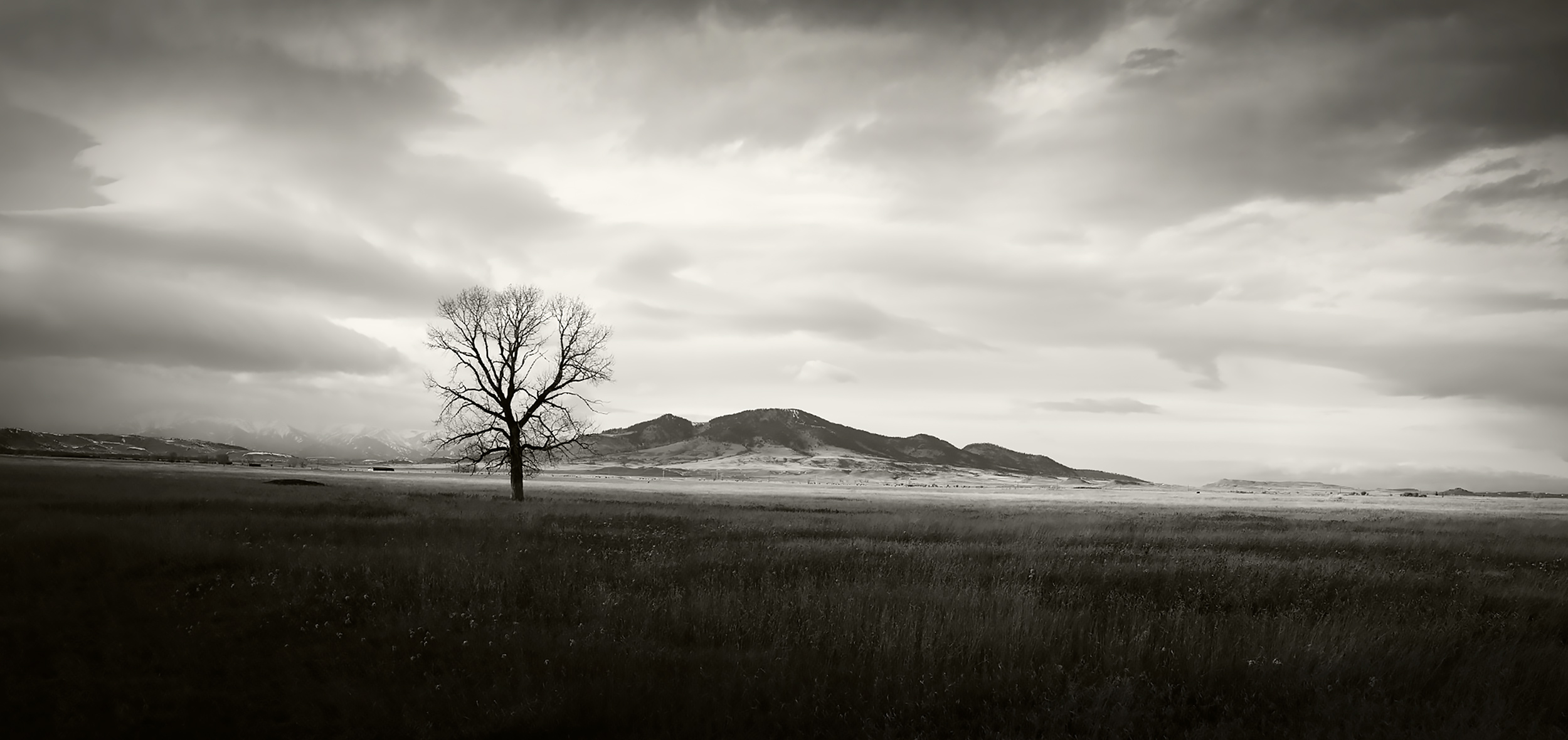 Lone Tree on the Cayuse Cattle Co. Ranch in Melville, Montana