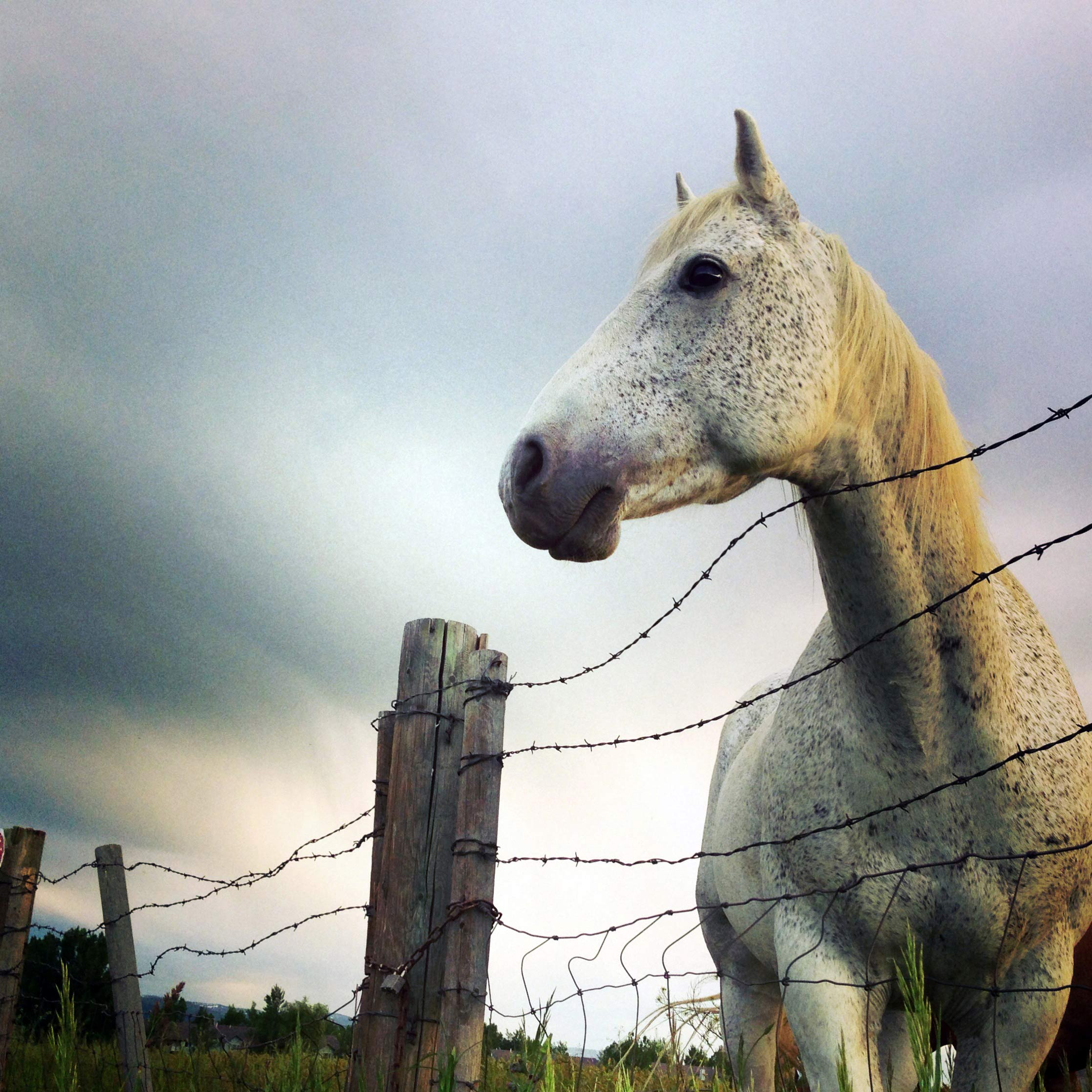 Horse standing behind an old fence in Montana