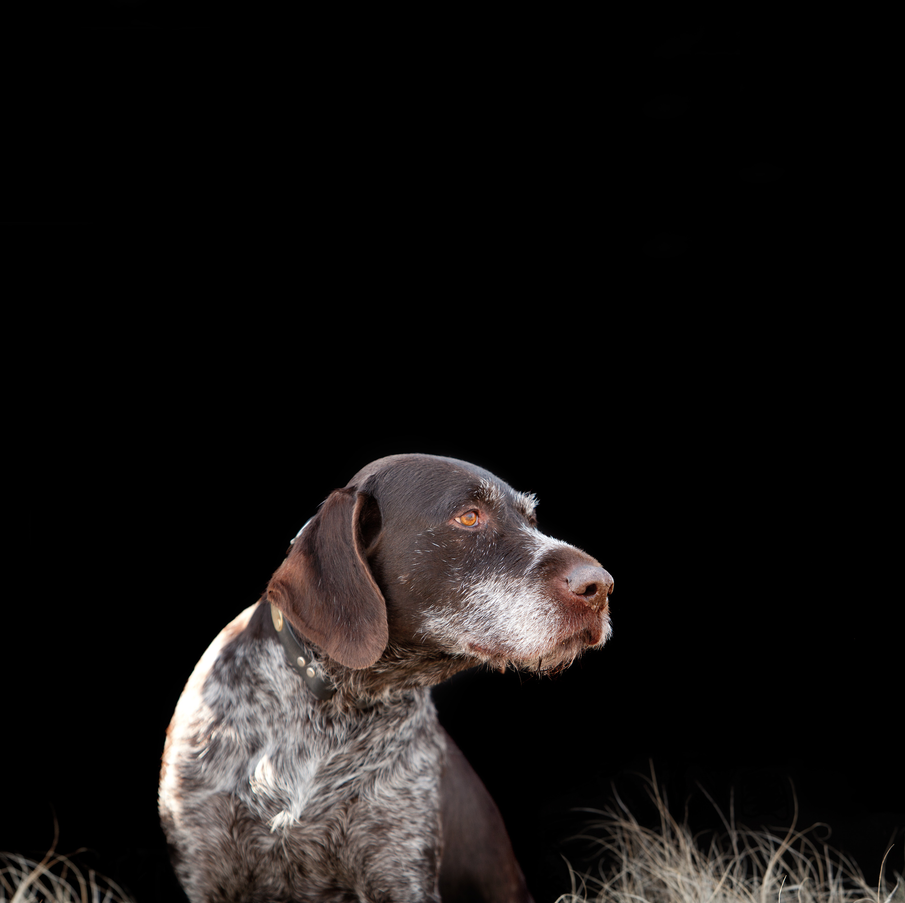 The Missouri Headwaters Gun Dog Club