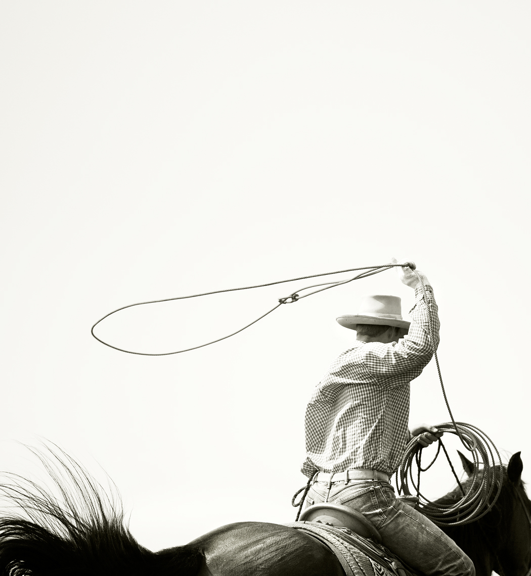 Roping Cattle at the WD Ranch in Montana